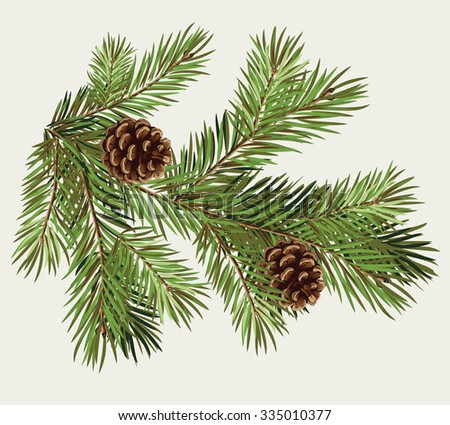 Vector branch of Christmas tree with pine cone