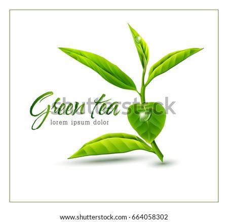 vector branch of green tea