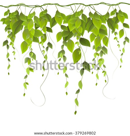 vector branch with leaves