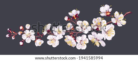 Vector branch with spring flowers. Realistic fruit tree branch. Detailed hand drawn clip art element isolated on dark background for your design, postcards, advertising, social media posts, textile