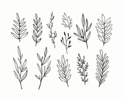 Vector branches and leaves. Hand drawn floral elements. Vintage botanical illustrations.