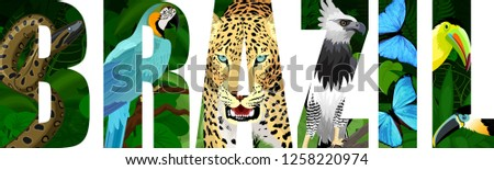 vector Brazil illustration with jaguar, harpy eagle, blue macaw ara, anaconda, blue morpho and toucan