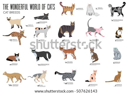 vector breed cats icons set