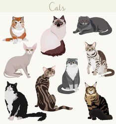 Vector Breed cats in different poses.