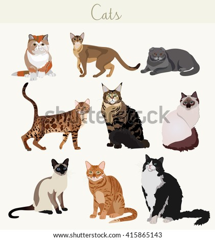 vector breed cats in different