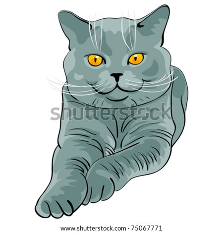 vector British Shorthair blue cat lies and looks on a white background