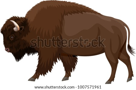 vector brown zubr buffalo bison