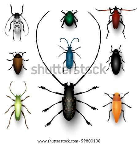 vector bug illustrations