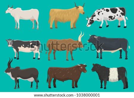 vector bulls and cows farm...