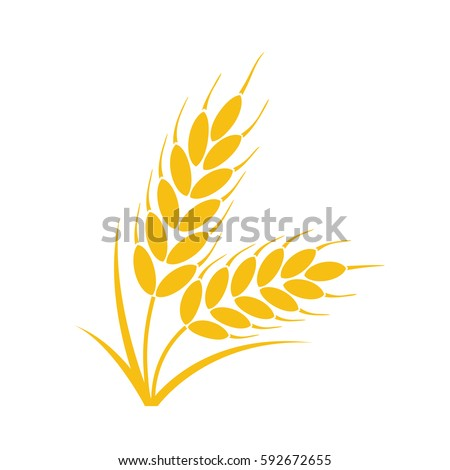 vector bunch of wheat  rye or