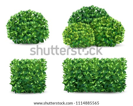vector bush in different forms