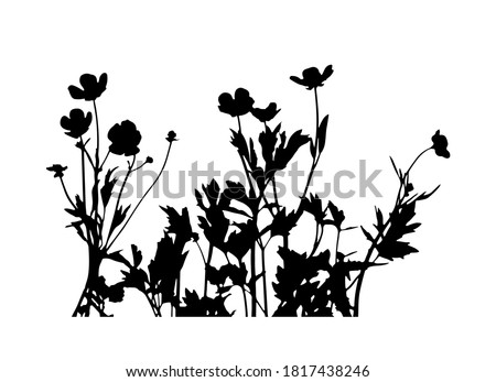 vector buttercup flowers - hairy buttercup (Ranunculus sardous) silhouette isolated on white background