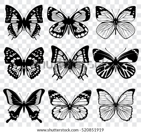 vector butterflies isolated on