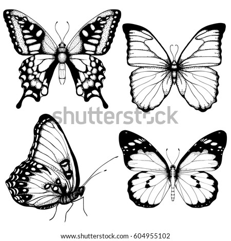vector butterfly hand drawn set