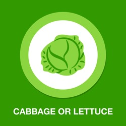 vector cabbage or lettuce illustration isolated - healthy vegetable, nutrition icon - green veggie food