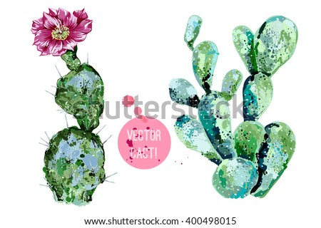 vector cactus isolated on white