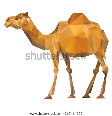 vector   camel geometric