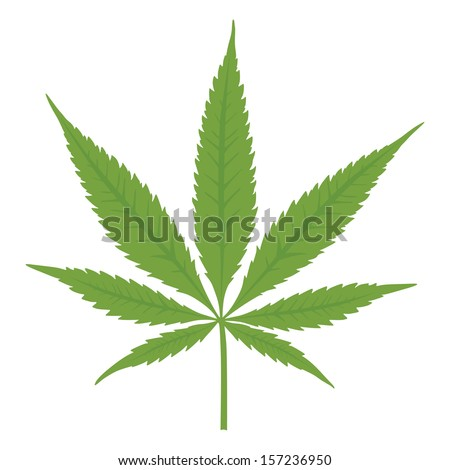 Vector cannabis leaf on white background. Marijuana.