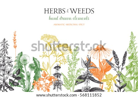 Vector card design with hand drawn herbs and weeds illustration. Decorative inking background with vintage plants sketch. Sketched floral template