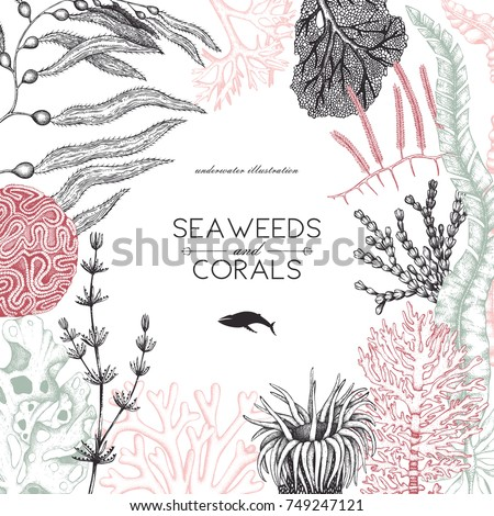 Vector card design with hand drawn sea corals, fish, stars sketch. Vintage background with underwater natural elements. Decorative sealife illustration. Wedding template