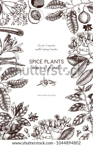 Vector card design with hand drawn spices. Decorative background with aromatic and tonic fruits plants sketch. Vintage kitchen template. Food or cosmetics ingredients. #1044894802
