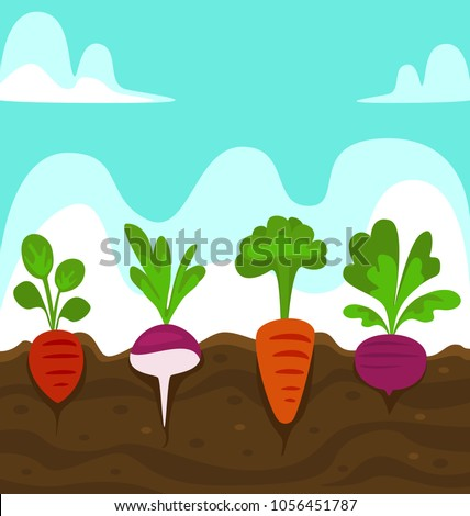 vector cartoon flat hand drawn fun root vegetables burried in soil illustration design template including beet carrot radish turnip with leaf