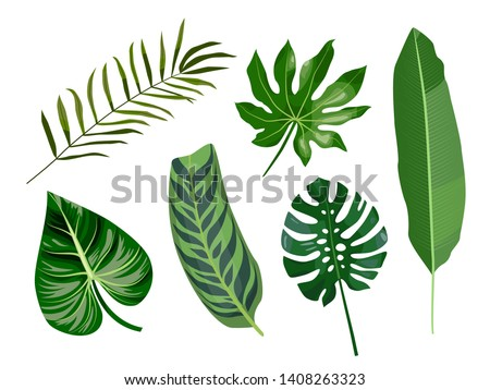 Vector cartoon flat set of tropical leaves, palms, aralia, banana, monstera leaf. Isolated elements for design. Graphic outline drawing collection herb and vegetation monsoon rainforest