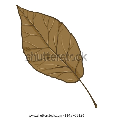 Vector Cartoon Illustration - Autumn Fallen Brown Leaf of Poplar