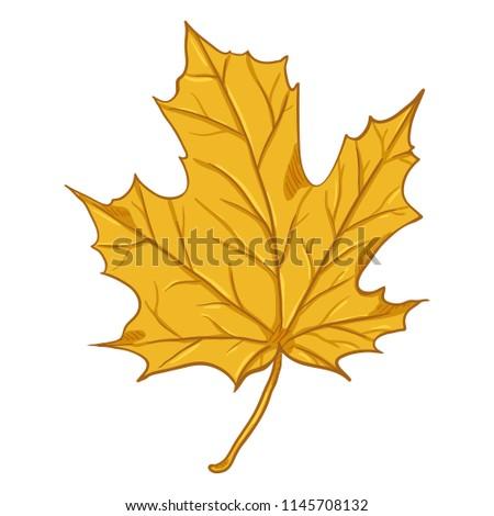 Vector Cartoon Illustration - Autumn Fallen Yellow Leaf of Maple