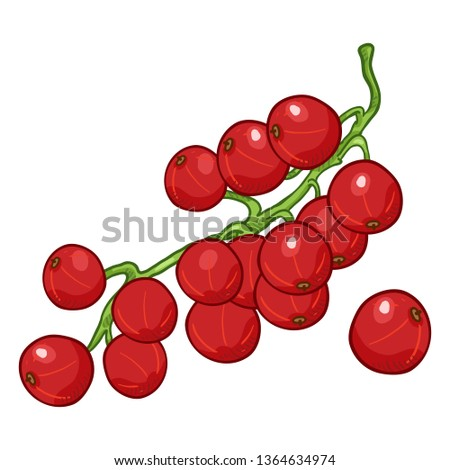 Vector Cartoon Red Currant Berries on Branch