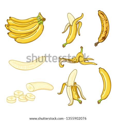 Vector Cartoon Set of Various Banana Illustrations