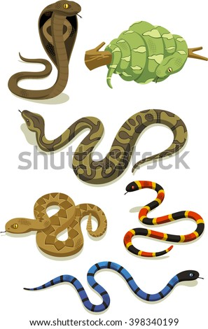 vector cartoon snake set