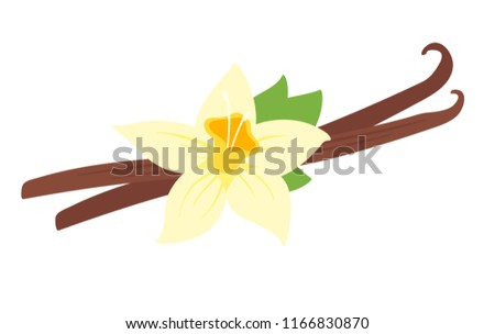 Vector cartoon style illustration of vanilla flower, isolated on white background.