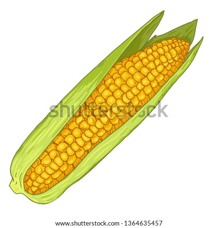 Vector Cartoon Yellow Corn Cob with Green Leaves