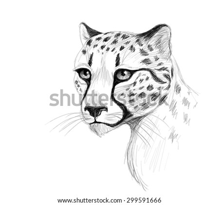 vector cheetah pencil portrait