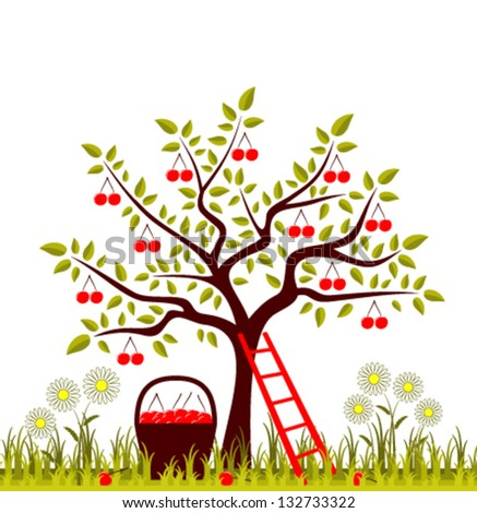 vector cherry tree, basket of cherries and daisies