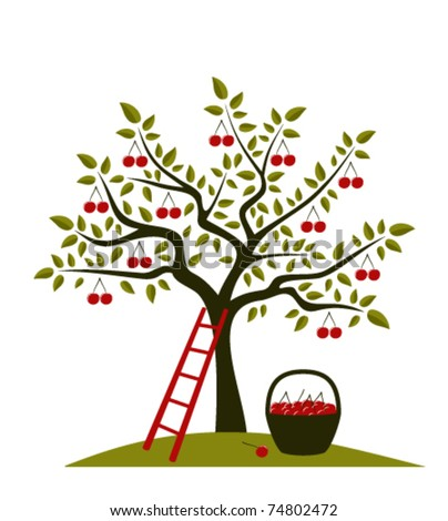 vector cherry tree, ladder and basket of cherries