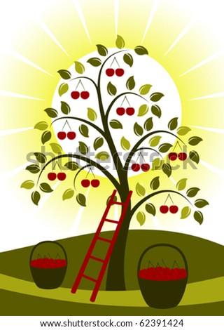 vector cherry tree  ladder