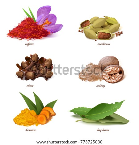Vector classic spices collection. Realistic saffron and cardamon cloves and nutmeg turmeric and bay leaves