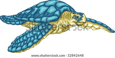 Vector clip art illustrations of Hawksbill sea turtle. Hand drawn artwork in loose, expressive style with NO gradients or blends.
