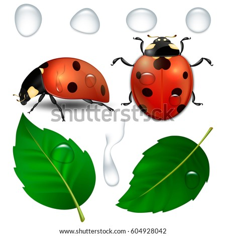 Vector close-up realistic ladybugs, water drops and leaves isolated. Design template, cliparts of spring symbol icons. EPS10.