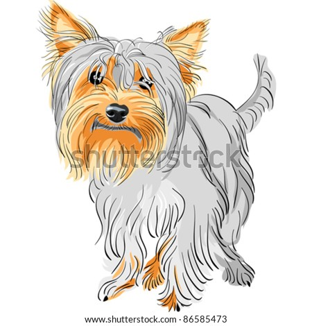 vector closeup color sketch dog Yorkshire terrier red and black - stock vector