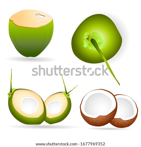 Vector Coconuts Illustrations for This summer, Coconut water,  Tender Coconut