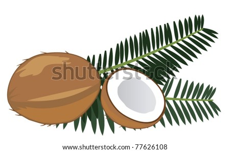 vector coconuts with leaves