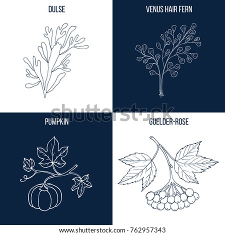 vector collection of four hand