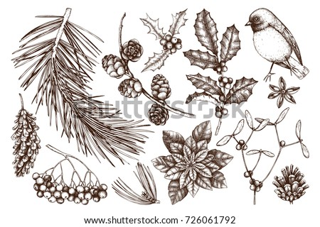 Vector collection of hand drawn christmas decor elements with bird. Vintage winter plants sketch set. Conifers, berries, flowers, cones, seeds illustration. Outlines. Holiday design.