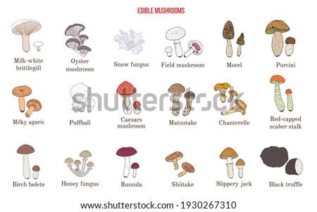 Vector collection of hand drawn edible mushrooms. Hand drawn botanical vector illustration Stockfoto ©