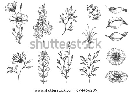 Vector collection of hand drawn plants. Botanical set of sketch flowers and branches.