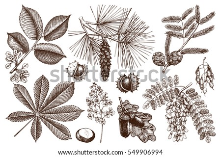 Hand drawn trees vectors download free vector art stock graphics vector collection of hand drawn trees illustration vintage set of leaves fruits seeds altavistaventures Images