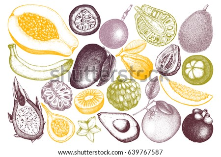 Vector collection of hand drawn tropical fruits illustration. Vintage set of leaves, fruits,  flowers sketch white background. Exotic garden drawing.